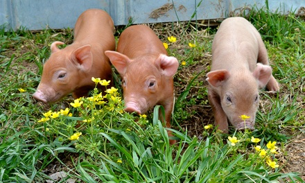 Farm Tour for Two Adults or a Family of Four and $10 Voucher to the Farm Store at P. A. Bowen Farmstead (50% Off)