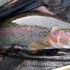 43% Off a Guided Fly-Fishing Trip for Two