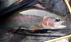 Sierra Fly Fisher Tours: $199 for a Guided Fly-Fishing Trip for Two from Sierra Fly Fisher Tours ($400 Value)