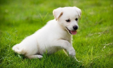 Two, Five, or Seven Nights of Dog Boarding at Hounds Town USA Farmingdale (Up to 58% Off)