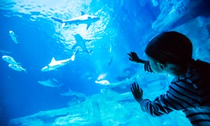 Aquarium de Paris: Pass pour 4 personnes pour une journée à l'Aquarium de Paris à 55 €