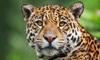 Zoo � tierpark-safaripark