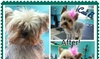 PFlixs Grooming - PFlixs Grooming: Up to 52% Off Full Grooming Packages at Petflixs Grooming