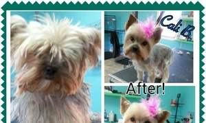 PFlixs Grooming: Up to 52% Off Full Grooming Packages at Petflixs Grooming