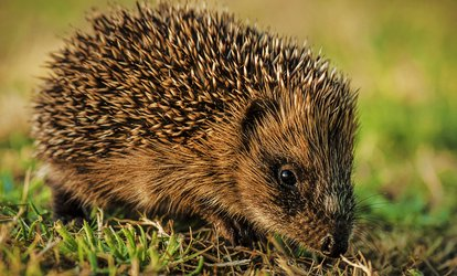 Tiggywinkles Wildlife Sanctuary Family Entry for Two Adults and Up to Three Children (Up to 54% Off)
