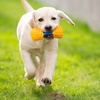 Up to 46% Off Dog Playcare at Pampered Pets Inn & Spa