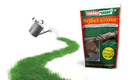 1, 2 ou 3 sachets de 1 kg de perfect grass pour tous types de sols