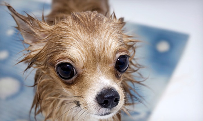 Bark Avenue Dog Wash - Ward 2: $14 for $27 Toward Pet Grooming and Bathing at Bark Avenue Dogwash, LLC