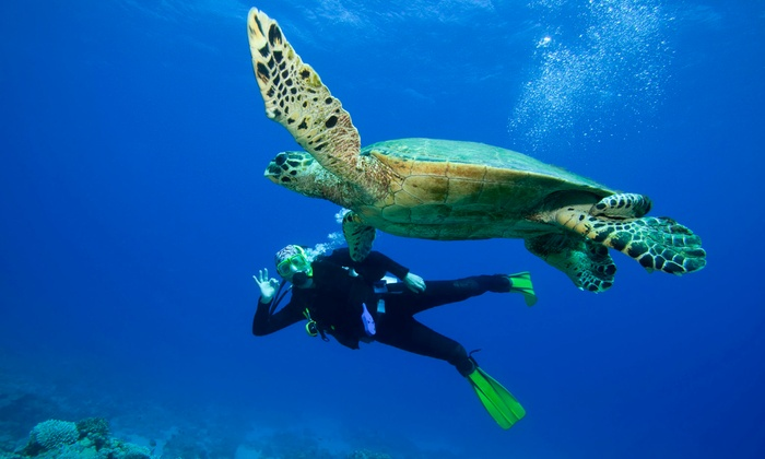 Eco Dive Center - Culver City: $339 for Open-Water Diver Certification Course with Scuba Mask and Snorkel from Eco Dive Center ($695 Value)