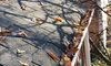 50% Off a Roof Inspection and Gutter Cleaning