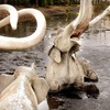 Page Museum at the La Brea Tar Pits –Up to 57% Off
