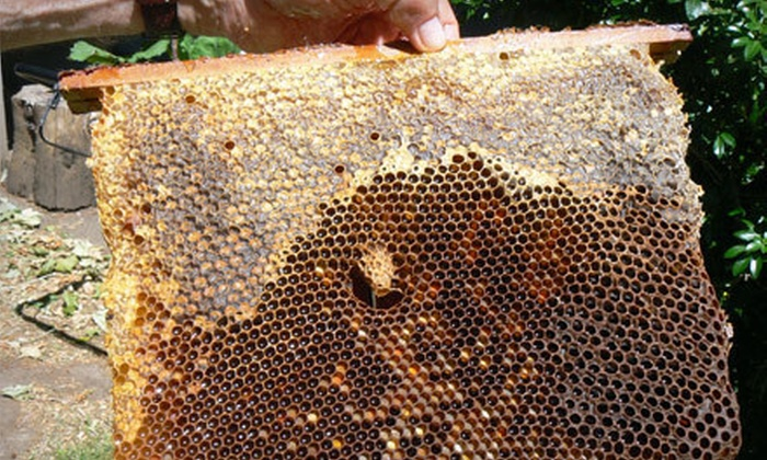 The Eugene Backyard Farmer - Downtown: $21 for a Two-Hour Beginner Beekeeping Class with a Book and Accessories at The Eugene Backyard Farmer ($42.93 Value)