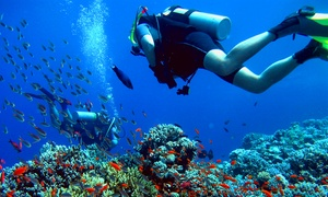 S.c.u.b.a. Diving Inc: Scuba-Diving Certification at S.C.U.B.A. Diving Inc (50% Off)