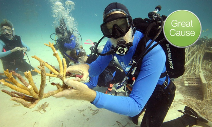 Coral Restoration Foundation: $10 or $100 Donation to Plant New Coral in a Threatened Reef