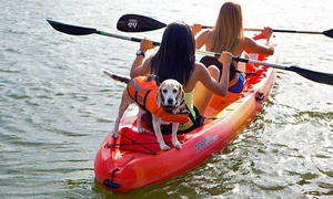 Rowing Dock: Two-Hour Rentals of One or Two Standup Paddleboards, Kayaks, or Canoes from Rowing Dock (Up to 71% Off)