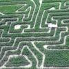 Half Off Corn Maze Visit at Schwallier's Country Basket