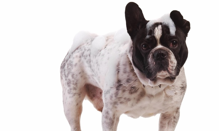 Hair of the Dog - Spring Valley: Two Self-Serve Dog Washes at Hair Of The Dog (50% Off)