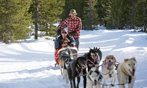 Oregon Trail of Dreams Sled Dog Rides: Hour of Dogsledding for One, Two or Four, or 26-Mile Dogsledding Trip for Two at Mt. Bachelor (Up to 48% Off)