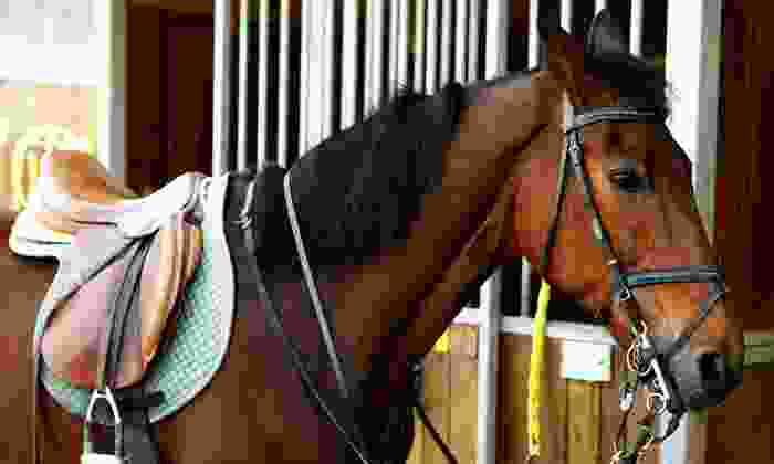 Fitzpatrick Performance Horses - Genoa-Jacks Valley: Horseback-Riding Lessons from Fitzpatrick Performance Horses in Minden (Up to 68% Off). Three Options