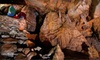 Up to 52% Off Caverns Tour or Spelunking Tour