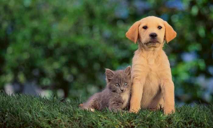 D'Amato Studios - Bryant: 60-Minute Pet Photo Shoot with Retouched Digital Images from D'Amato Studios (75% Off)