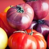 51% Off Heirloom Tomatoes at Crooked Sky Farms