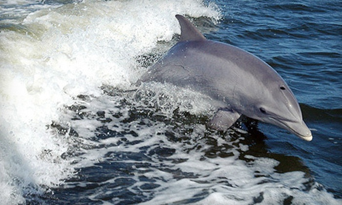 Sightseer Whale & Dolphin Trips - Wildwood: Whale- or Dolphin-Watching Cruise for Two, Four, or Six from Sightseer Whale & Dolphin Trips in Wildwood (Up to 65% Off)