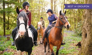 High Point Stables: Beginner Horseback Riding Lesson and Trail Ride for One, Two, or Four at High Point Stables (50% Off)