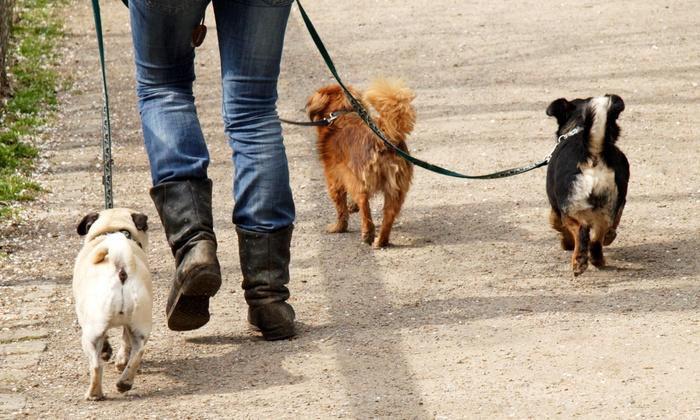 Full Circle Pet Care - San Diego: Five Dog Walks from Full Circle Pet Care (40% Off)