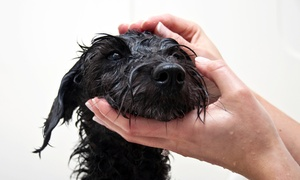 Chateau 4 Paws: Dog Grooming for a Dog Weighing Under or Over 50 Pounds at Chateau 4 Paws (Up to  51% Off)