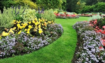 Plants or Landscaping from Bloom Nursery (Up to 60% Off). Two Options Available.