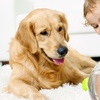 Up to 59% Off Carpet Cleaning from All Star Chem-Dry