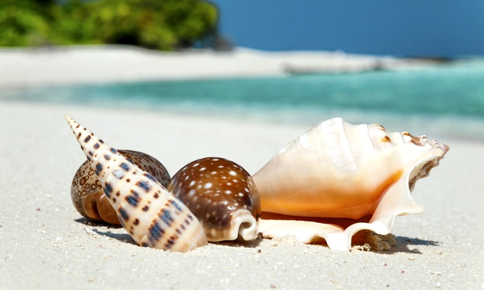 Pure Naples - Downtown Naples: $23 for a Three-Hour Shelling Trip from Pure Naples ($39 Value)
