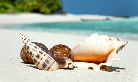 $35 for a Three-Hour Shelling Trip from Pure Naples ($55 Value)