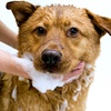 Up to 55% Off Dog-Bath Packages