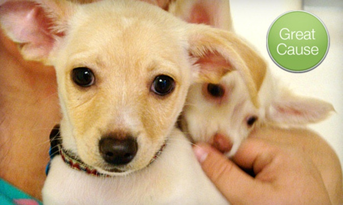 MaxFund Animal Adoption Center - Lincoln Park: $10 Donation to Help Care for Homeless Animals