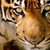 LuLu Shrine Circus – Up to 50% Off