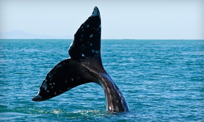 Outer Island Expeditions - Multiple Locations: Three- or Five-Hour Whale-Watching Trip from Outer Island Expeditions (Up to 51% Off)