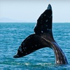 Up to 51% Off Whale-Watching Trips