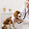Up to 59% Off at Valley View Pet Health Center
