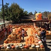 57% Off Pumpkin Patch Package at Zoomars