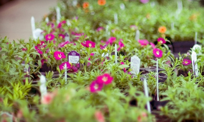 Perreault Nursery - North Grafton: $15 for $30 Worth of Plants and Gardening Supplies at Perreault Nursery in Grafton