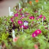 Half Off Plants and Gardening Supplies in Grafton