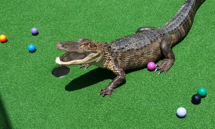 Smugglers Cove - Multiple Locations: $14.99 for One Round of Mini Golf for Two at Smugglers Cove (Up to $25.98 Value). Five Locations