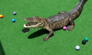 Smugglers Cove: $14.99 for One Round of Mini Golf for Two at Smugglers Cove (Up to $25.98 Value). Five Locations
