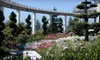 Rosedale Gardens - Rosedale: $15 for $30 Worth of Plants, Pottery, and Other Home Accents at Rosedale Gardens in Gig Harbor