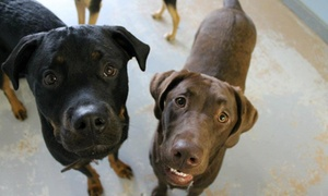 Buster & Lilly's Doggie Daycare: Five Days of Doggy Daycare at Buster & Lilly's Doggie Daycare & Boarding (46% Off)