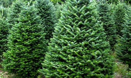 New Farm Christmas Trees