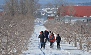 Le Domaine Orléans: Snowshoeing Tour and Cider Tasting at Domaine Orléans and the Surrounding Area (Up to 64% Off)