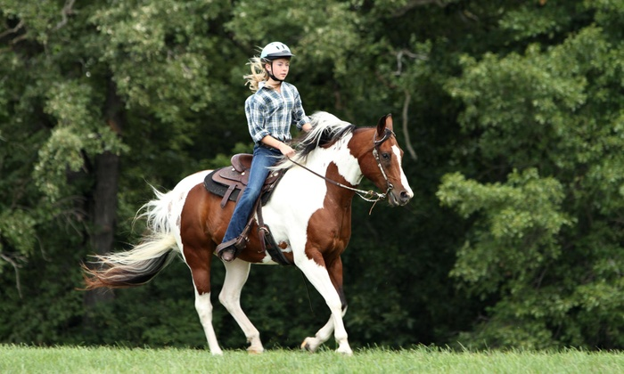 Spring Wind Stables - High Springs-Alachua: $26 for $55 Worth of Horseback Riding — Spring Wind Stables